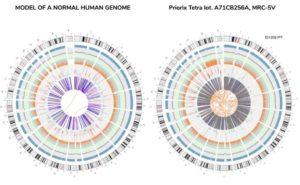 Normal genome vs cancerous genome