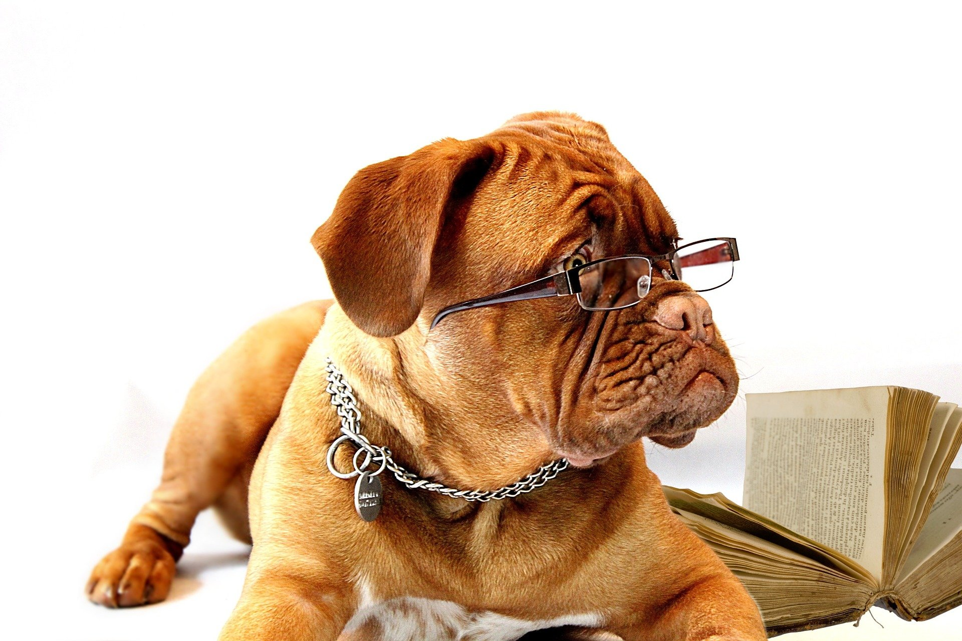 Photo of dog with reading glasses